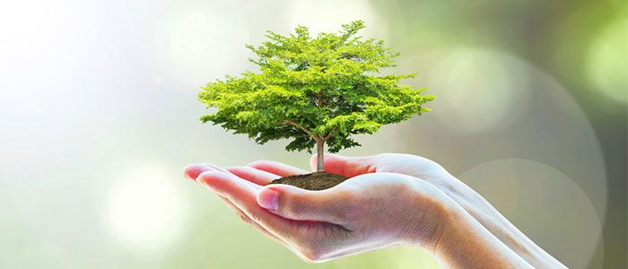Environment and sustainability with ALWAYS DISCREET